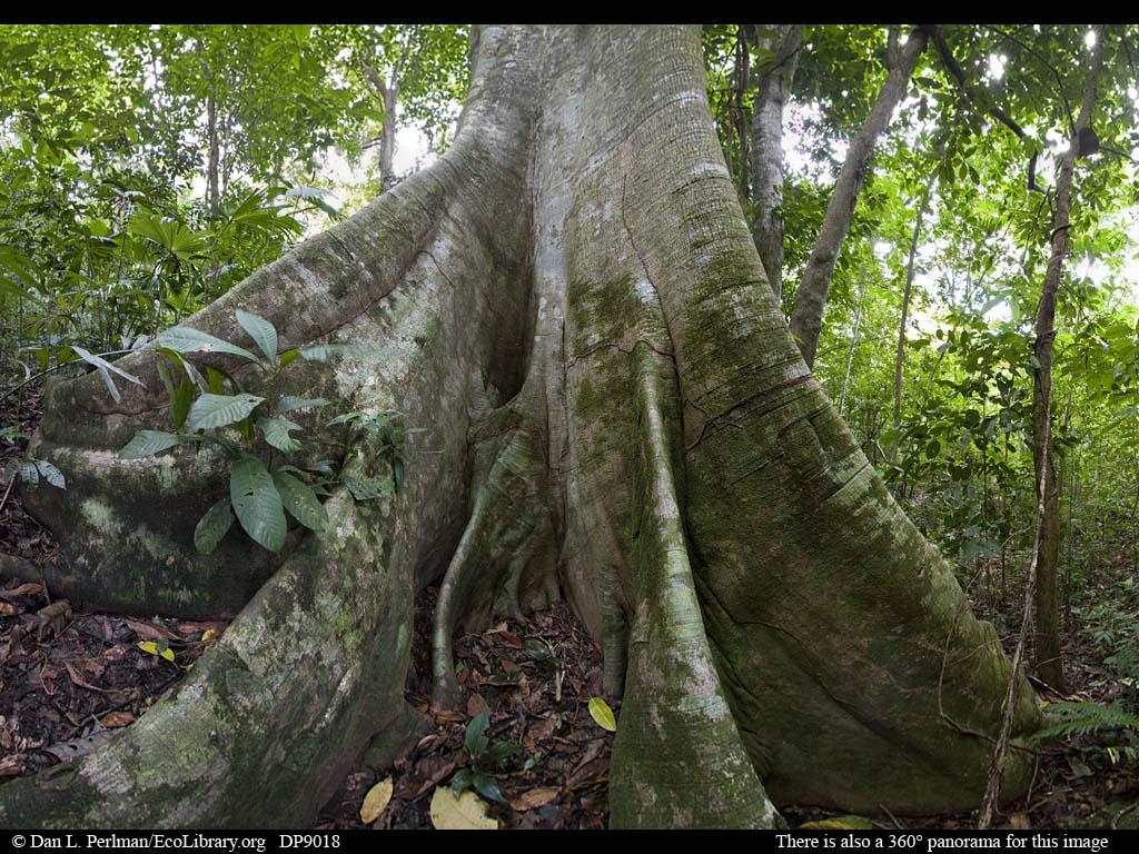 Pin amazon rainforest animals names on pinterest
