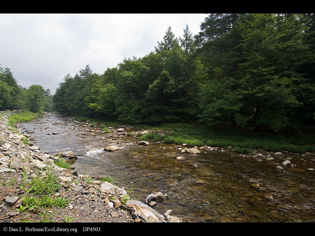 Neversink River, part of NY City39;s water supply