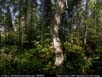 Panorama: boreal forest