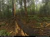 Panorama: lightning damage in forest
