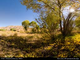 Panorama of Alkali meadow in the desert
