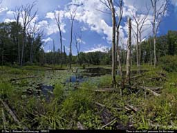 Panorama of Beaver pond and dam