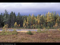 Bog and Boreal Forest, Vermont