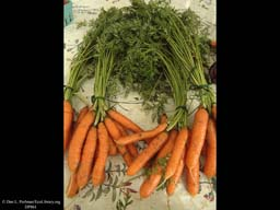 Carrot Roots, Daucus carota