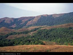 Deforestation, Western Ghats, India