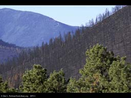 Forest fire: burnt and unburnt ridges
