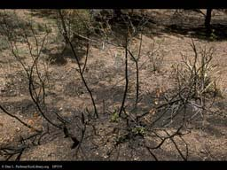 Forest fire: regrowth after 28 days 2