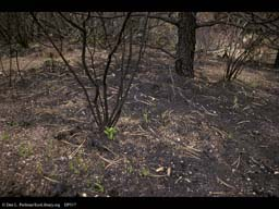 Forest fire: regrowth after 30 days