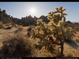 Panorama of Mojave Desert vegetation, Caliornia