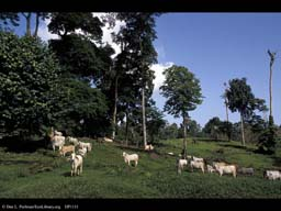 Rainforest converted to cattle pasture, Costa Rica