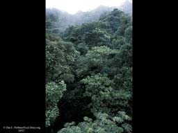 Tropical rainforest canopy, Monteverde, Costa Rica
