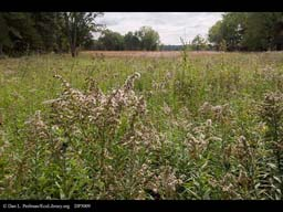 Restored prairie at Aldo Leopold's Shack, Wisconsin