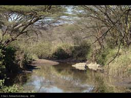Stream and riparian vegetation, Tanzania