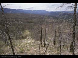 Succession four years after forest fire 1