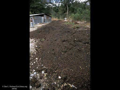 Coffee bean hulls being composted
