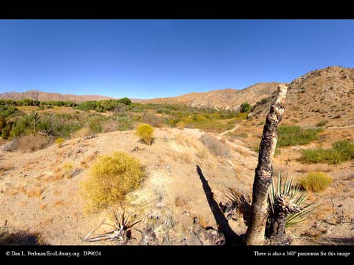 Panorama of Riparian zone in the desert