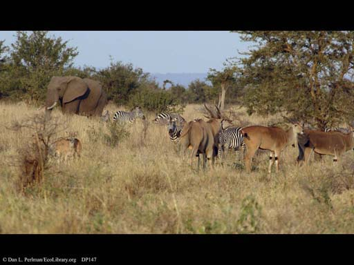 Changing savanna scene, Tanzania (# 3 of 3)