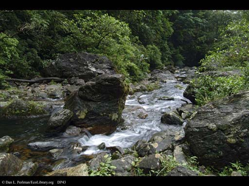 Tropical rainforest and stream, Atlantic Forest, Brazil