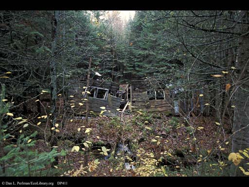 Succession: forest overgrowing house