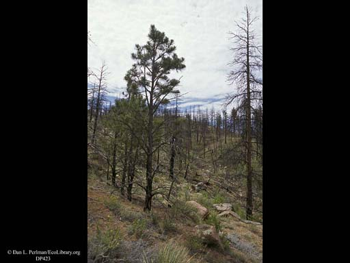 Succession four years after forest fire 4