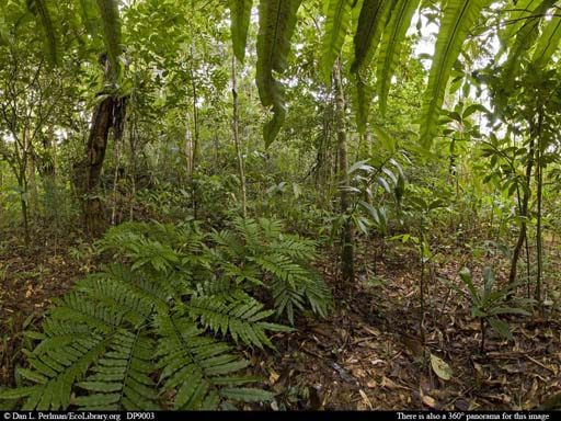 Panorama of Tropical rainforest near ocean, N Madagascar