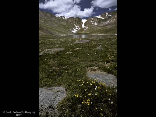 Tundra at Summit Lake, Mount Evans, Colorado